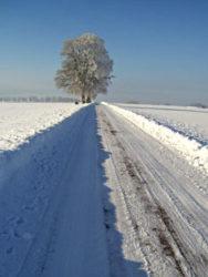 Winterlandschaft mit Feldweg und Baum